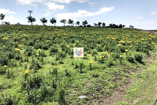 幸せの黄色い丘